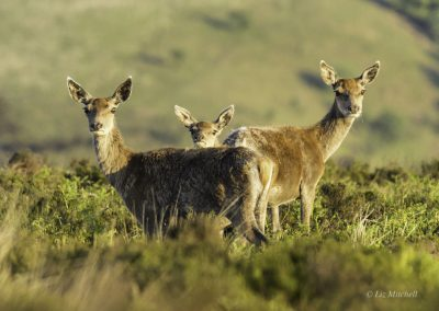 ews-gallery-fauna-5