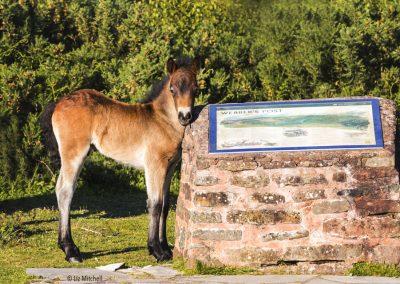 ews-gallery-fauna-7