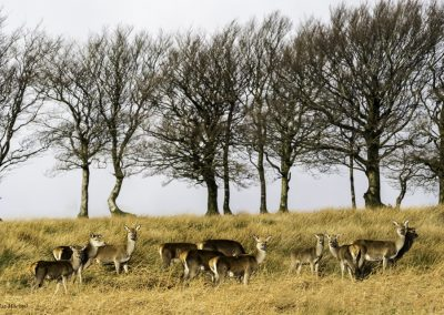 ews-gallery-fauna-21